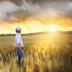 farmer, future, field, sunset
