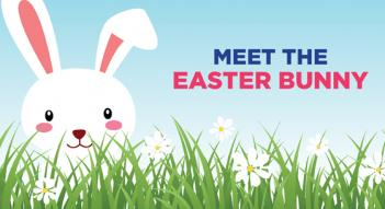 Bunny, grass, easter Meet the Easter Bunny